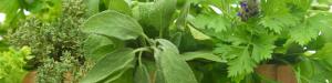 Aromatico- famiglie olfattive - Il diario dei profumi